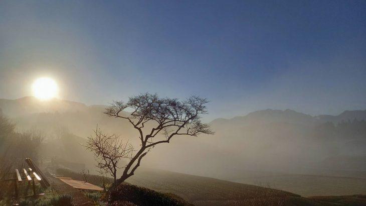岩永製茶園の和紅茶入荷しました(2020年度産の最終入荷)